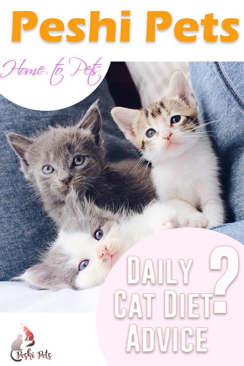 Daily cat diet advice