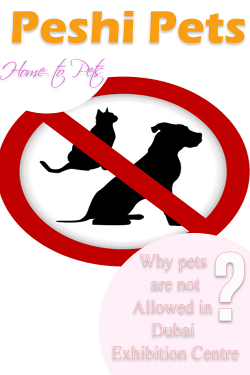 Why pets are not Allowed in Dubai Exhibition Centre